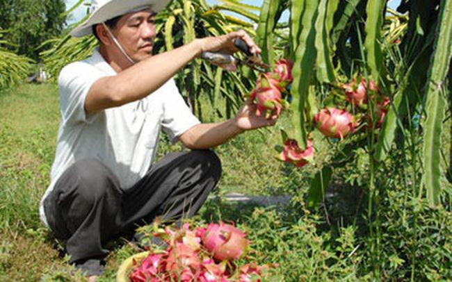 Nông sản khởi động lại thị trường Trung Quốc